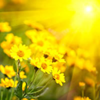Recent Obituaries | Hodges Family Funeral Home